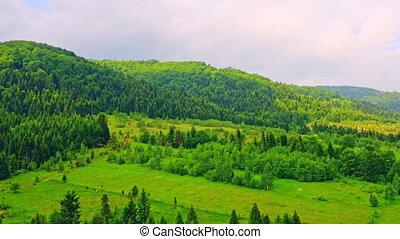 pin, mouches, au-dessus, forêt, bourdon