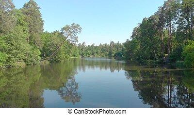 pin, rivière, eau, sur, forêt
