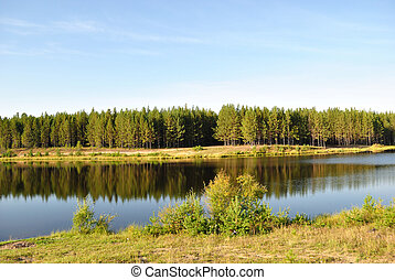 pin, rivière, forêt, jeune
