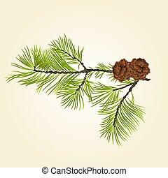 pin, vecteur, conifère, cônes, branche