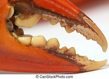 Crab's pincer.