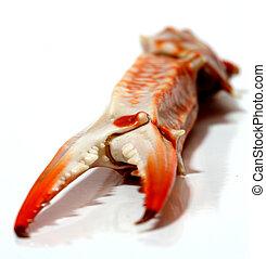 Flower crab pincer.