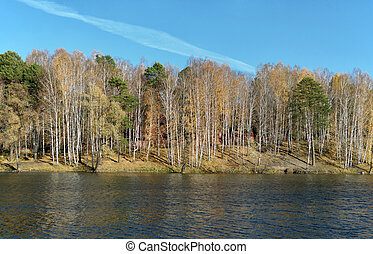 Pine and birch on the shore of a small lake