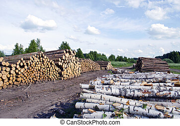 Pine and birch Timber Logs Stacked on field near forest