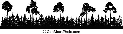 Pine and coniferous forest silhouette, panorama. Vector ...