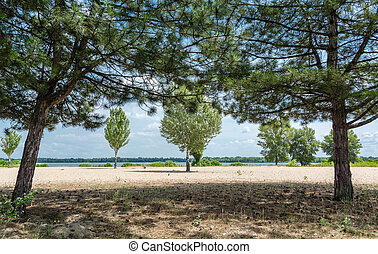 Pine and deciduous trees growing in front of the river, sand.