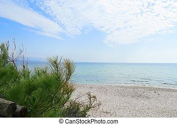 pine at the beach