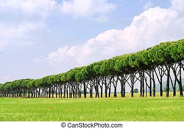 pine avenue 01