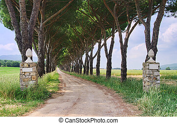 pine avenue 03