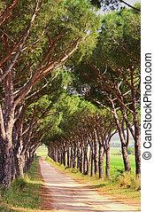 pine avenue 06