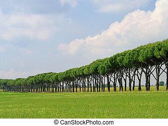 pine avenue 07