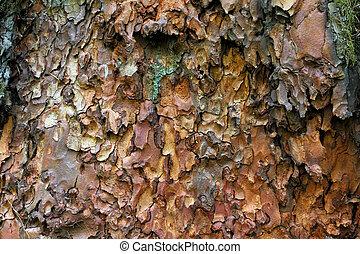Pine bark - Bright beautiful pine bark