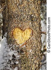 Pine Bark Heart