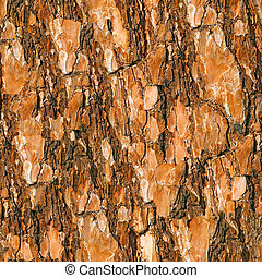 Pine bark seamless background.