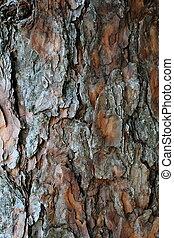pine bark, wood natural background
