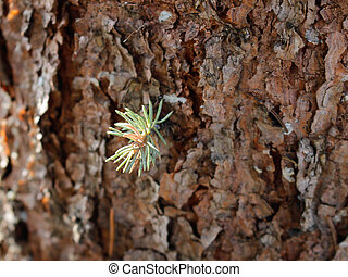 Pine Bark Wood Texture