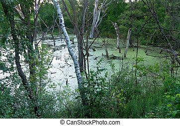 Pine Bend Bluffs Marsh