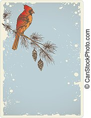Pine branch and cardinal bird - Vintage Christmas background...