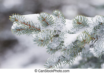 Pine branch and falling snow