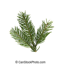 pine branch closeup