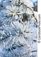 pine branch covered with snow - shallow focus