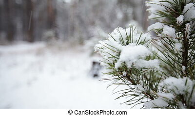 Pine branch in snow. HD video - Pine branch in snow....