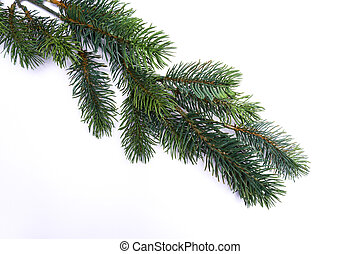 pine branch isolated - pine branch on white background