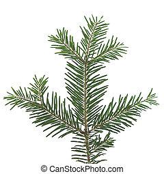 Pine branch cutting
