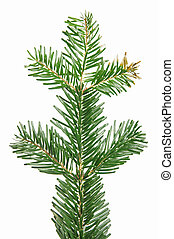 pine branch isolated over a white background