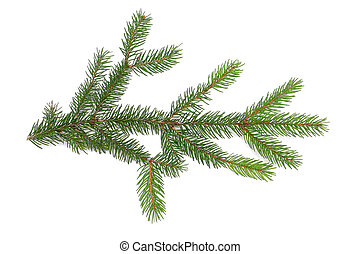 Pine Branch - Pine branch on white background