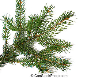 pine branch - pine Christmas branch isolated on white...