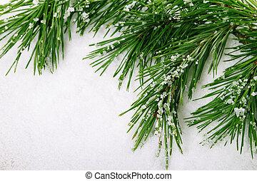 Pine branch - Green pine tree branch on snow background