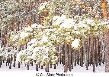 pine branch under snow in winter forest