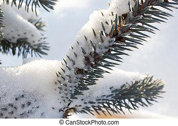 Pine branch under snow