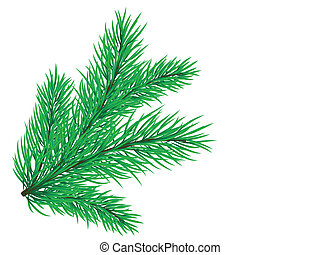Pine branch - Vector pine branch