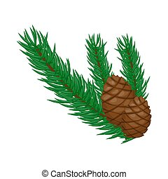 Pine branch with cones on a white background vector illustration.