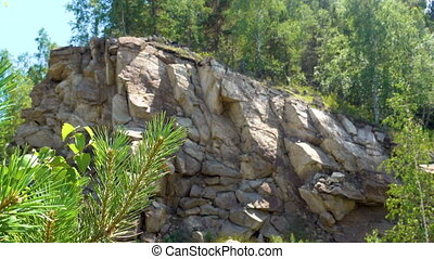 Pine branch with green needles sways in the wind on a background of beautiful rock.