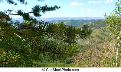 Pine branch with green needles sways in the wind on a background of beautiful mountains.