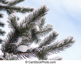 pine branch with snow