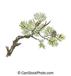 Pine branches and cones and snow on a white background...