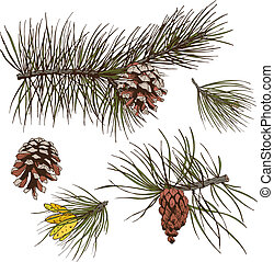 Pine branches colored print - Pine fir cedar spruce forest...