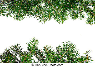 Pine branches frame isolated on white background
