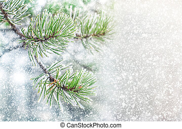 Pine branches in hoarfrost yearly winter snowy day