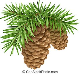 Pine branches with cones. Isolated illustration in vector...