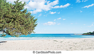 pine by the sea