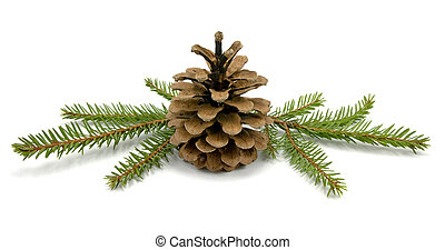 Cone and fir branches