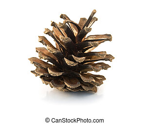 cone - pine cone and needles