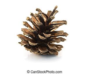 cone - pine cone and needles