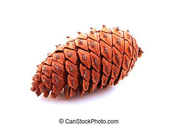 Pine cone - Close up pine cone