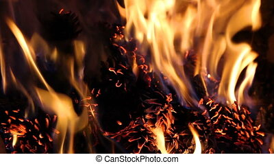 Pine cone in fire, decoration background